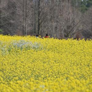 春の花の、笑顔たちの。