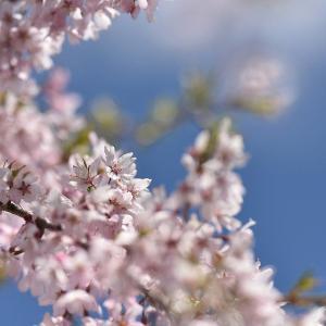 過ぎていく春