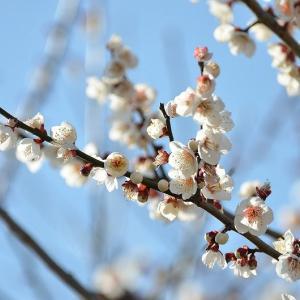 すこしずつ春