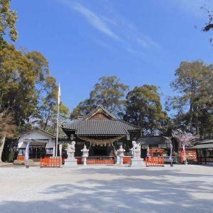 嘯吹八幡神社のかわいい梅♡