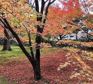 京都 大原 三千院の紅葉を楽しむ。三千院の「お守り」購入