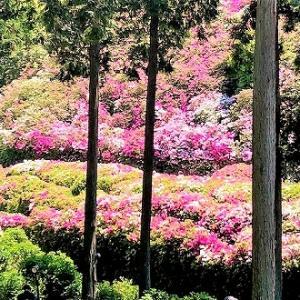 三室戸寺「つつじ園」観光。境内のパワースポットで健康長寿・金運・勝運を上げる