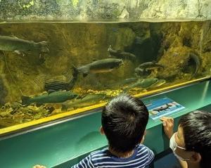 羽生の県立水族館にて: