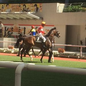 【先週の出資馬の結果】ルメールで期待したけどレッドイグニスは三木特別(1000万下)4着で・・・