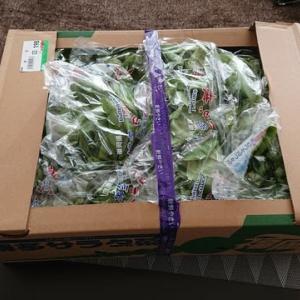横須賀は野菜が安い!