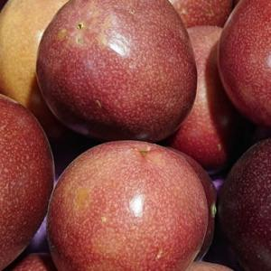 フルーツの季節