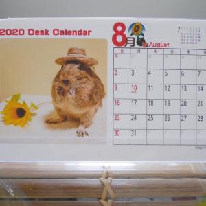 8月のカレンダー/かじリンローラー/今朝の小さい家族の様子