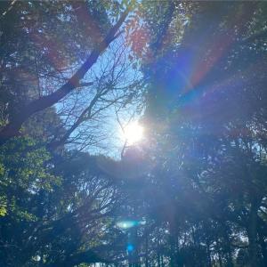 【罪悪感】★Naja★身体症状  インナーチャイルドを癒すレメディー