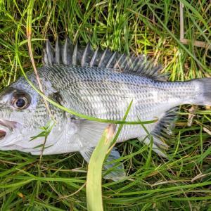 またも1匹しか釣れない病が発動、なチニング2釣行(2020/9/13、9/14)【2020年9月釣行】