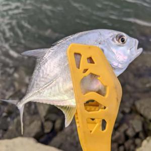 意外な魚がマイクロワインドで大爆釣でツツ抜け達成な大淀川ライトゲーム(2021/10/17)【2021年10月釣行】