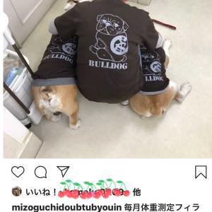 獣医さんのスタッフさんgood job👍