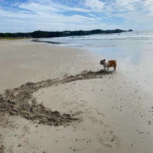 是清が描いた 波の絵🌊