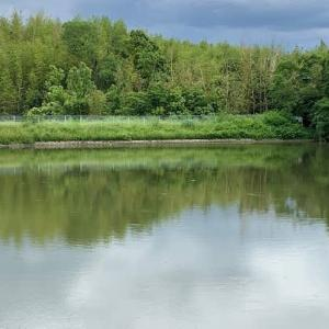円明教寺とお茶屋池