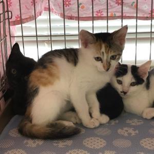 保護猫ちゃんを迎えるにあたっての、タイ人夫の発言