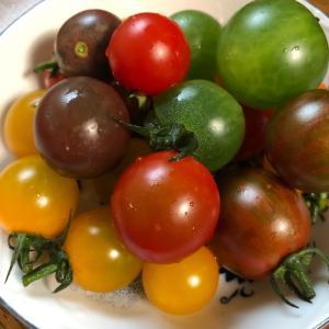 色々な色のトマトを頂きました。宝石みたいで、キレイ(*^ω^*)#大田区 #大田区池...