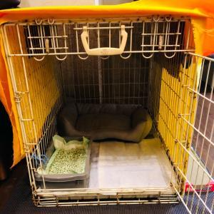 ついに明日ニャンコ達が到着します。中学生の時飼った柴犬が、家に来て1ヶ月使い、18...