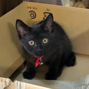 やっと慣れてきたルアンリット君捨て猫ごっこが好きなようで段ボールを出たり入ったり...