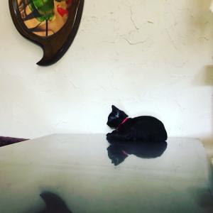 アート作品になってるルアンリット君黒猫のシルエットは、その美しい^ ^#大田区 ...