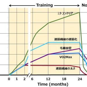 持久トレーニングの期間と効果について。