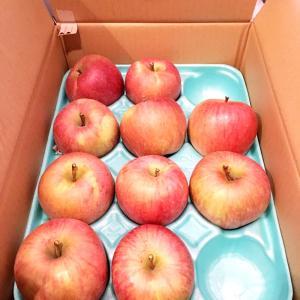 ふるさと納税 りんご。