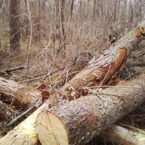 風倒木の処理