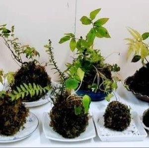 イベント「 苔玉作り」のお知らせ