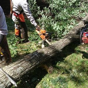チェーンソーが木に挟まれました!