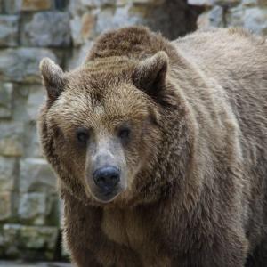 熊に遭遇した時の対処法(カナダ編)