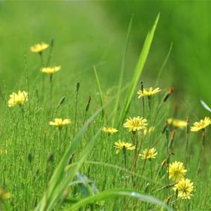 命の匂い草いきれ