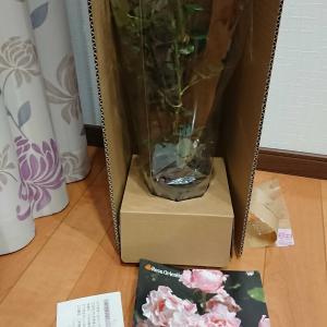 薔薇のお買い物♪