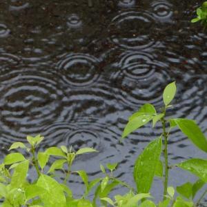雨、そして次女の言葉