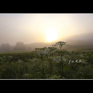 朝霧の日に