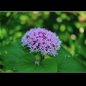 ボタンクサギの花