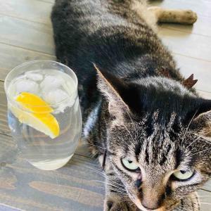 暑い日の午後に氷結レモン水♪