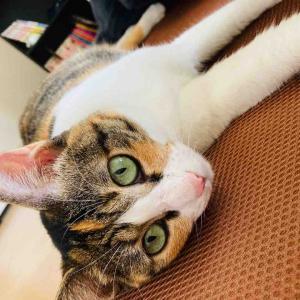 金曜日の猫たち version4