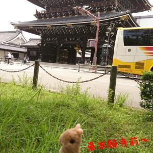 羊毛フェルトうさぎの高野さんの京都さんぽin東本願寺と羊ぷりぷり毛ハリケツブローチ(笑)