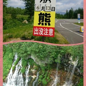 青い池と白ひげの滝(美瑛町)