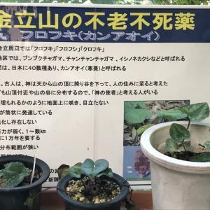 『佐賀県カンアオイ保存会』の登録品の鑑賞とオリジナルの薬草茶♪ 4月20日