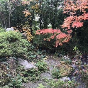 中庭はいい感じに紅葉してきたというのに、相変わらず家の中はバタバタです 11月28日