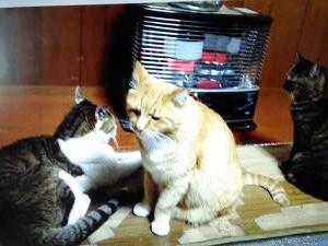 爆弾を抱える猫達、サカイ君との出会い