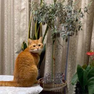 天然猫じゃらし