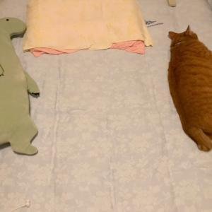 恐竜と寝子