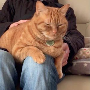 好きオーラは猫にも伝わる