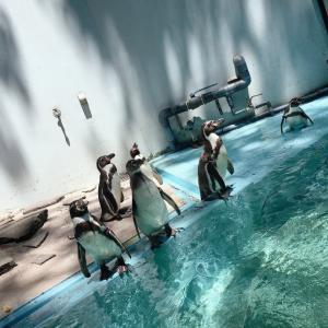 動物公園へ。