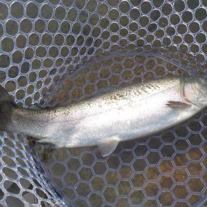 2日連続釣行、今日は管釣り