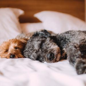 うつで寝てても稼げる方法「ポイ活」