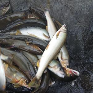 今年の鮎釣りの準備 その○○?快適なカーライフ