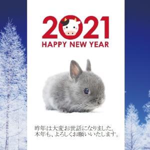 茨城県水戸市にあるウサギ販売店「プティラパン」 謹賀新年2021