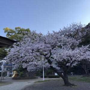 控え目に桜🌸見物〜〜