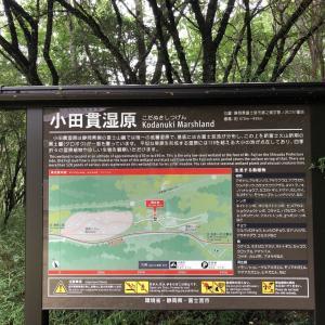 2年ぶりに小田貫湿原